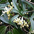 Pour une petite fleur de mars, premier ensemble de printemps,veste et robe