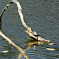 Lac d'Agès 29041638
