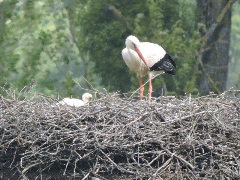 blog oiseau elo 077
