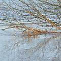 23/01/19 : le ried inondé # 2