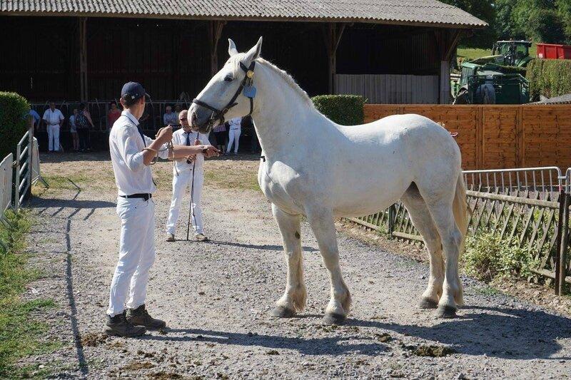 Etoile de la Course - 18 Juin 2017 - Concours élevage local - Hucqueliers (62) - 1ere (3 ans)