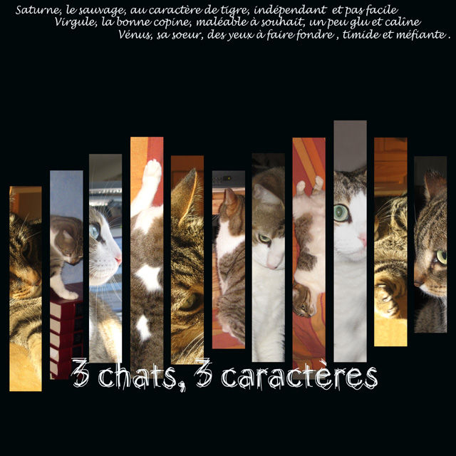 3 chats, 3 caractères