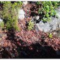 Le sentier amasse les feuilles et compte nos pas...