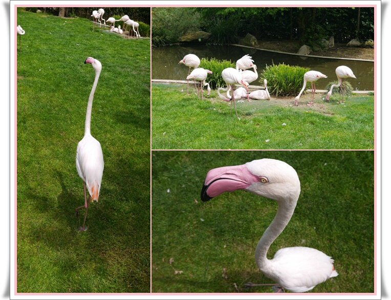 01 Les flamands roses