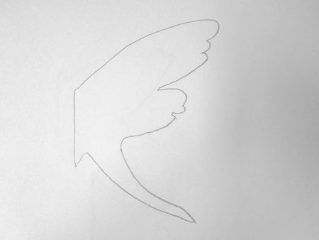 papillons 010
