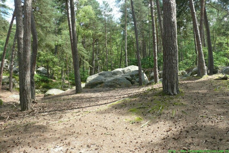 foret-fontainebleau-009