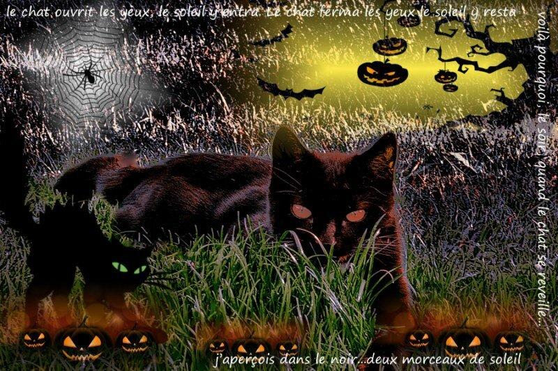 chat noir mimih [800x600]