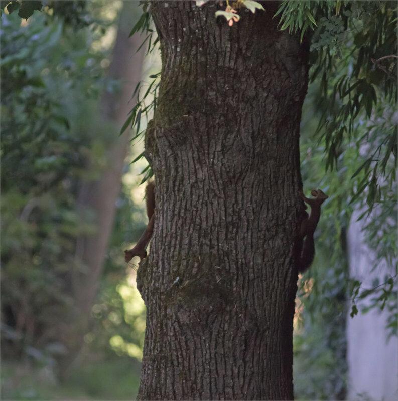 arbre écureuils 2 inversés noisette 110920