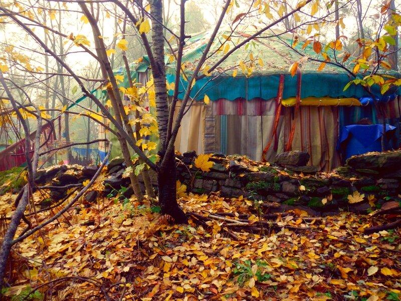 érable d'automne sur yourte yurtao