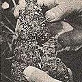 La naissance du vaudou avec le maitre marabout papa zougan