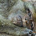 Visite à la montagne des singes