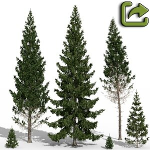 01 Picea abies Export Norway spruce fir tree 3d plant model factory 3ds cad max fbx obj icon1
