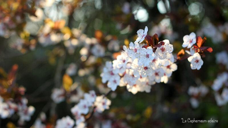 Le Jardin de Basilic - fleurs 5