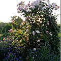 Windows-Live-Writer/Jardin_10232/DSCN0739_thumb