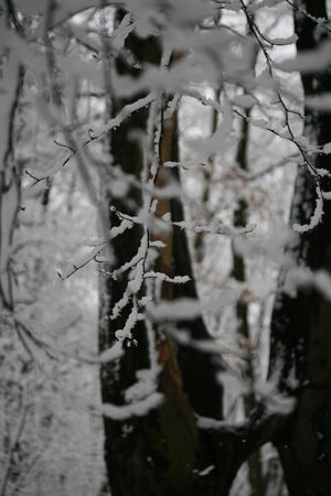 delire_neige_7_fevrier_2009_089