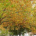 arbre d'automne à Roanne