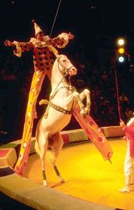 normal_acrobate_cirque