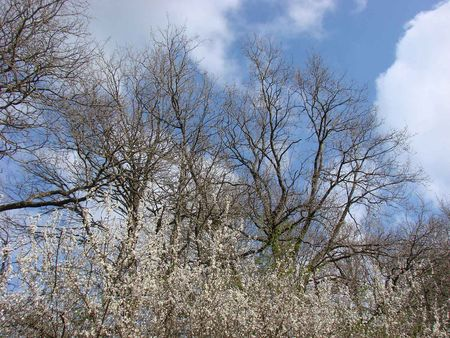 haie_arbres_nuages