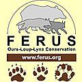 Loups, lynx, ours : les dernières de feus.