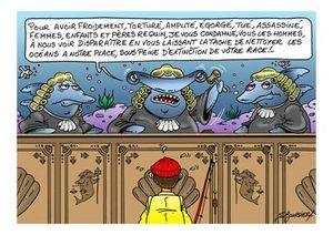 justice de requin