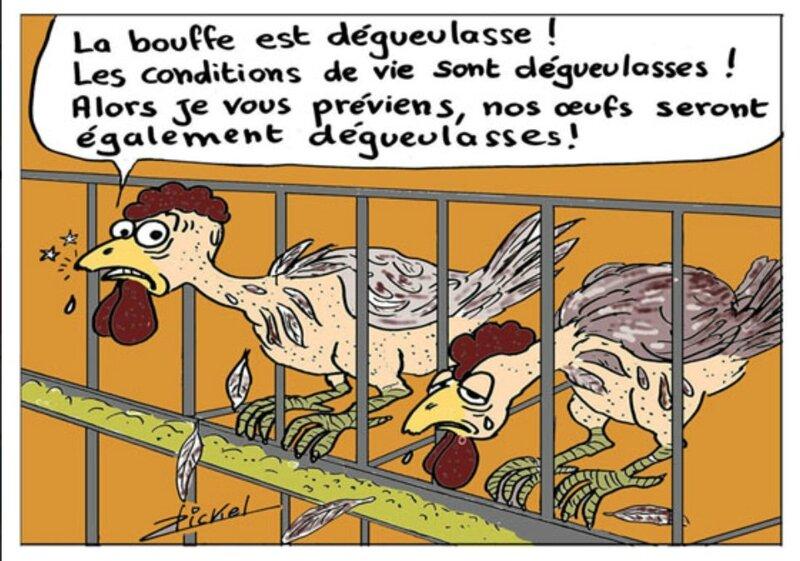 Dessin élevage intensif poulet
