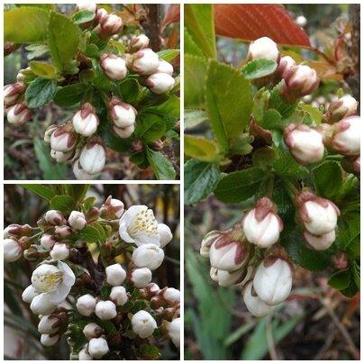 Jardin avril (16)