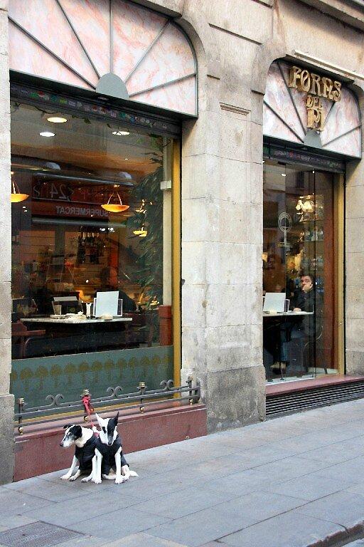 5-Barcelone - Barri Gotic, chien_4999