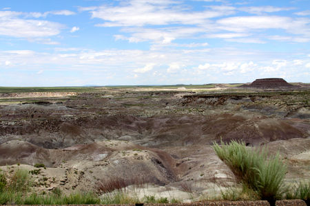 Petrified_Forest_18