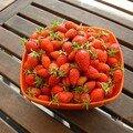 Jardin, mes fraises