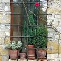 Fenêtre fleurie sur la rue à Yèvre le Chatel (45)