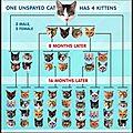 Pourquoi stériliser les chats et chattes ?
