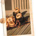 macarons halloween3