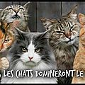 chats dominent monde
