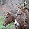 Bedous : l'âne qui murmurait à l'oreille du cheval (64)