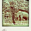 india (1496)-pola