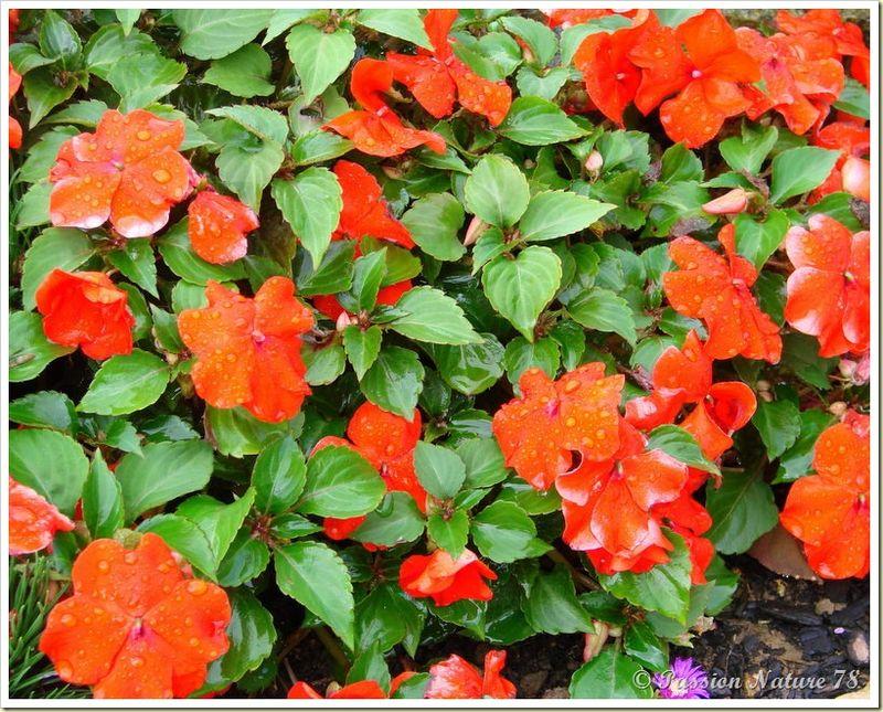 Le jardin de PassionNature78 (21)