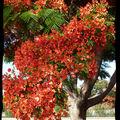Notre arbre de noël ...