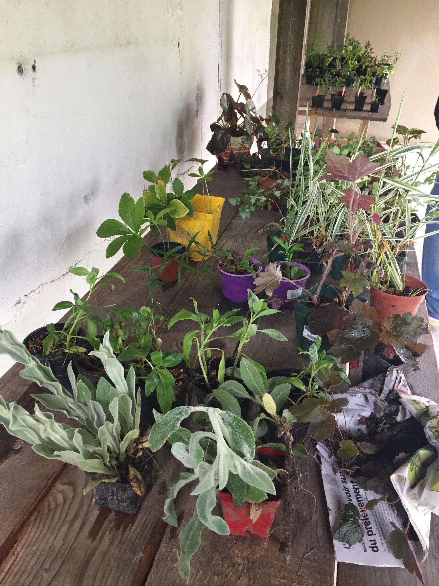 Le troc plantes