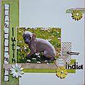 India ma petite chienne
