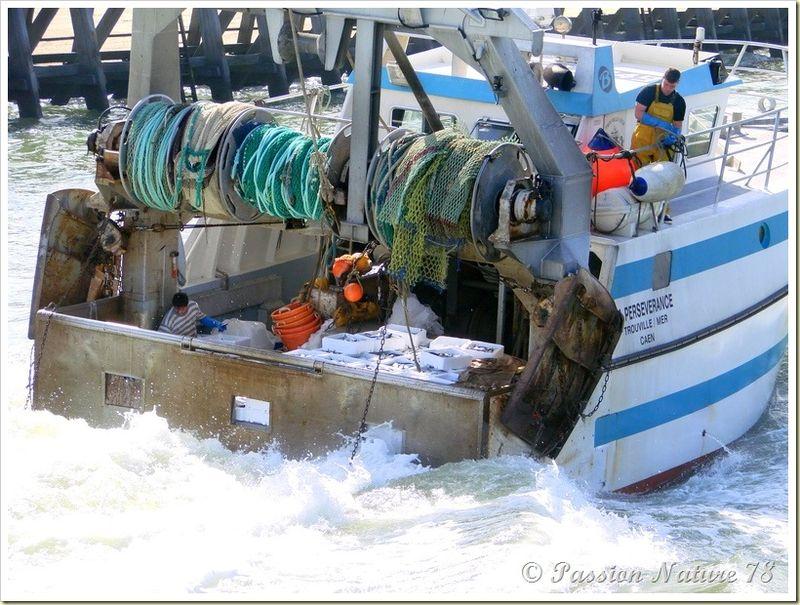 Retour de pêche (6)