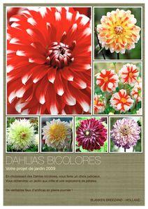 Affiche_Dahlias_bicolores