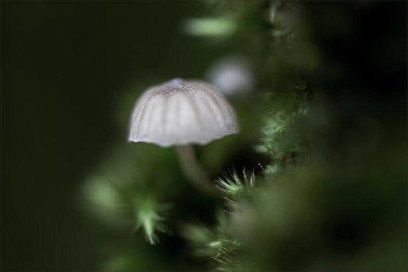 SM Ville champignon 6 121118