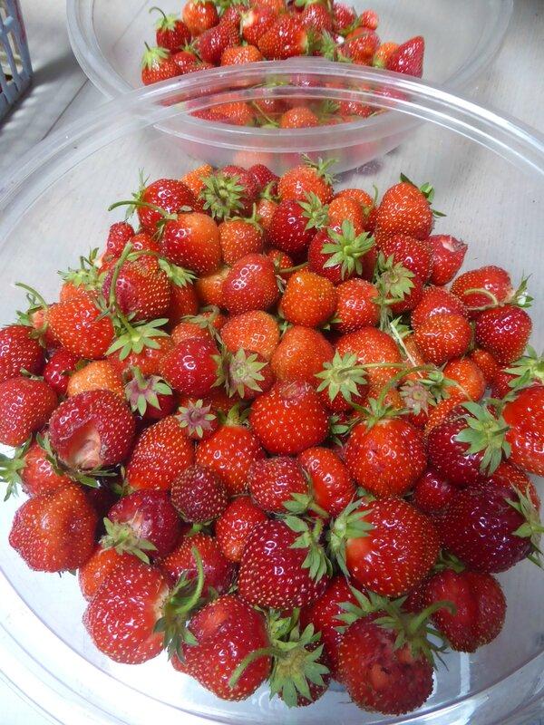9-fraises (2)