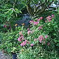 rosiers et hémérocales