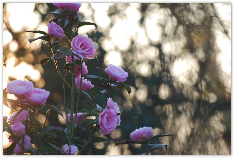 mars_2010_3