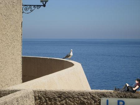 persilya_photo_du_lundi_du_c_t__de_Monaco_040808_l