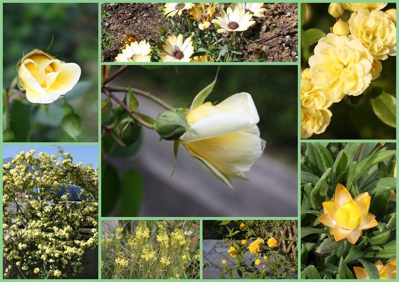 montage_fleurs_jaune