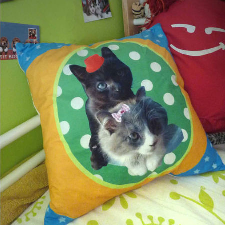 coussin chat 1