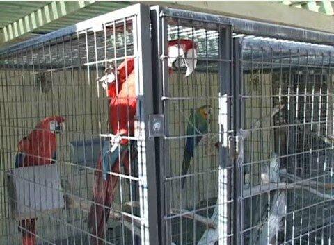 perroquet zoo
