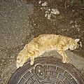 [grif' informe] j'ai trouvé un pauvre petit chat écrasé...